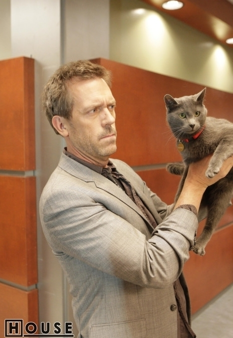 here-kitty-5x18-house