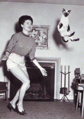 dancingcat0001.JPG